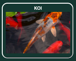 Fish species for pond stocking and lake stocking harrison for Koi fish farm near me