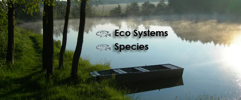 Species & Eco Systems - Harrison Fisheries